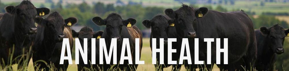 animal-health.jpg