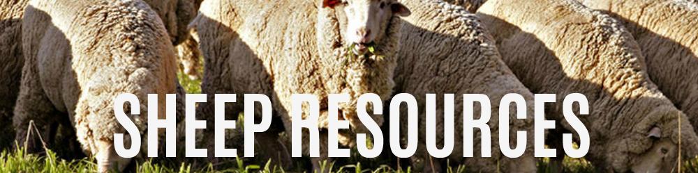 sheep-resources.jpg
